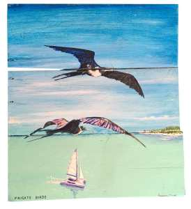Frigate birds Catamaran