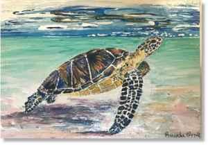 Turtle Snorkelling Antigua boat trips